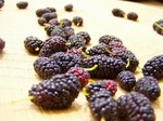 20130602mulberry-on-goza.jpg